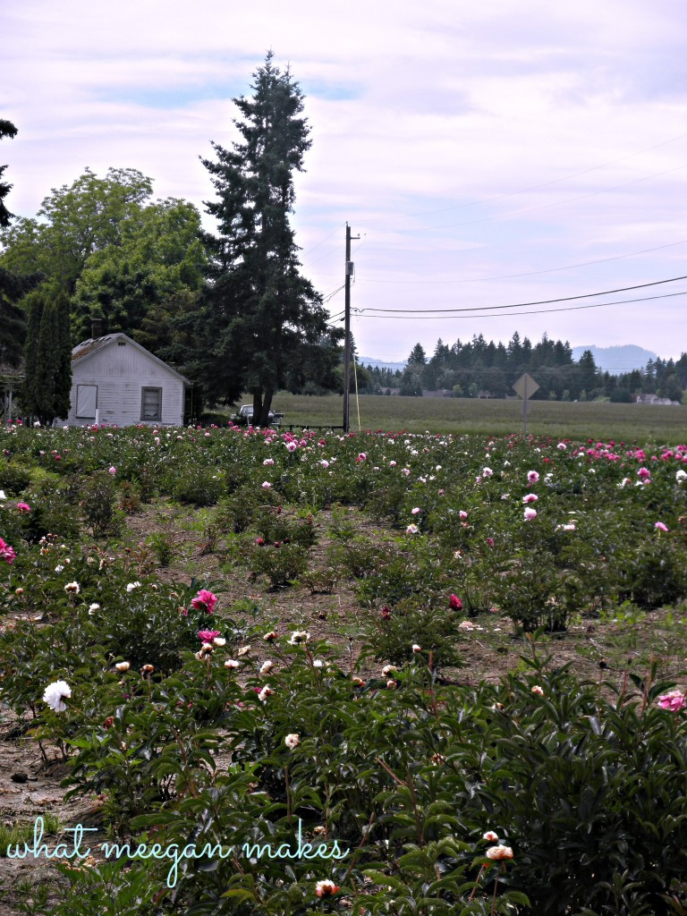 Field Trip Friday To A Rose Garden & Peony Farm.