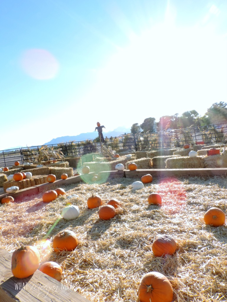 Field Trip Friday Fall Harvest Festival
