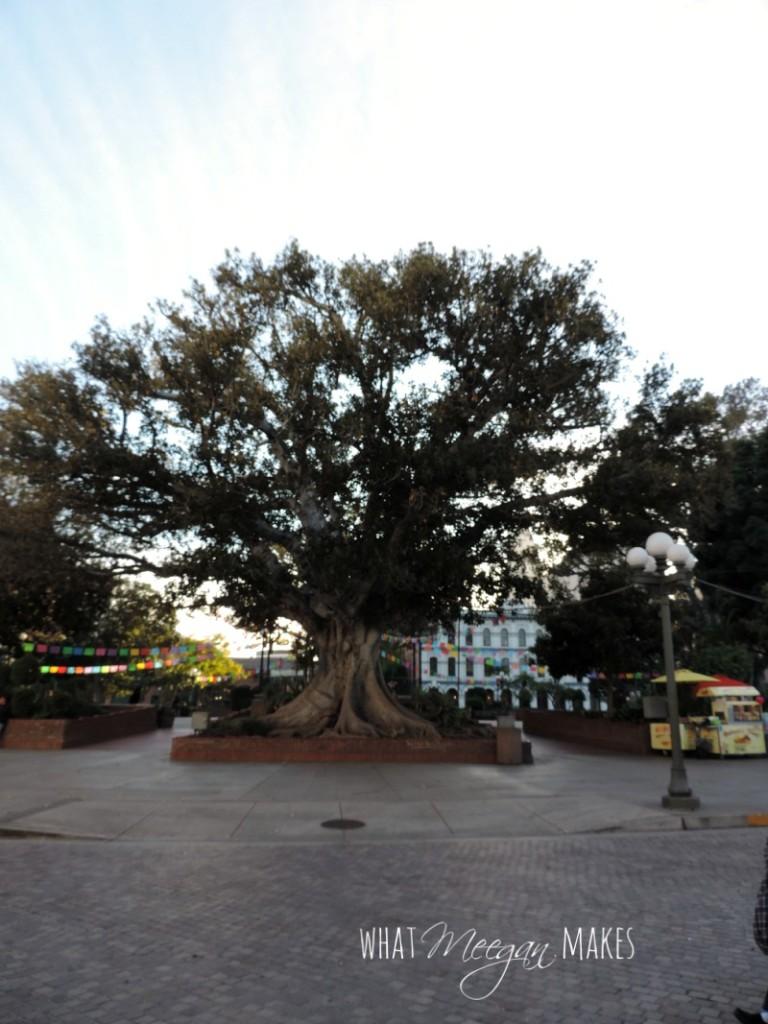 Olvera Street8