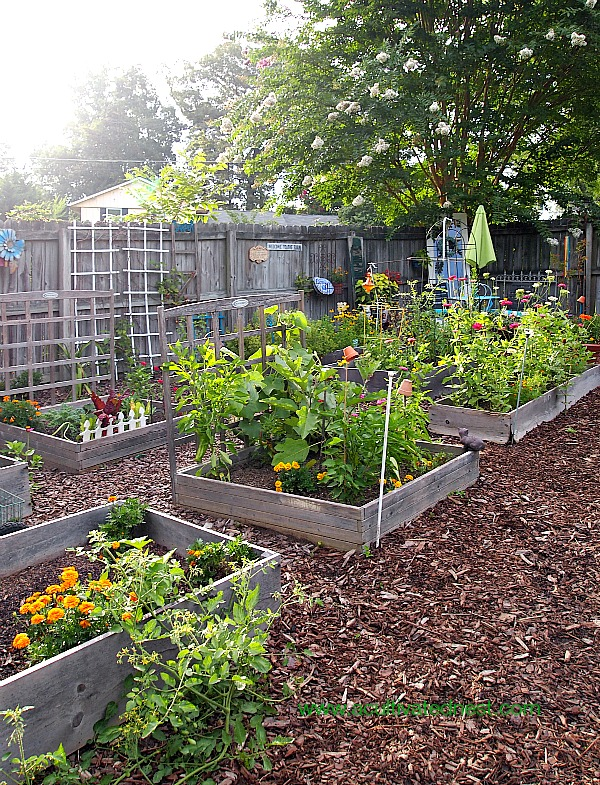 vegetable-garden-raised-beds
