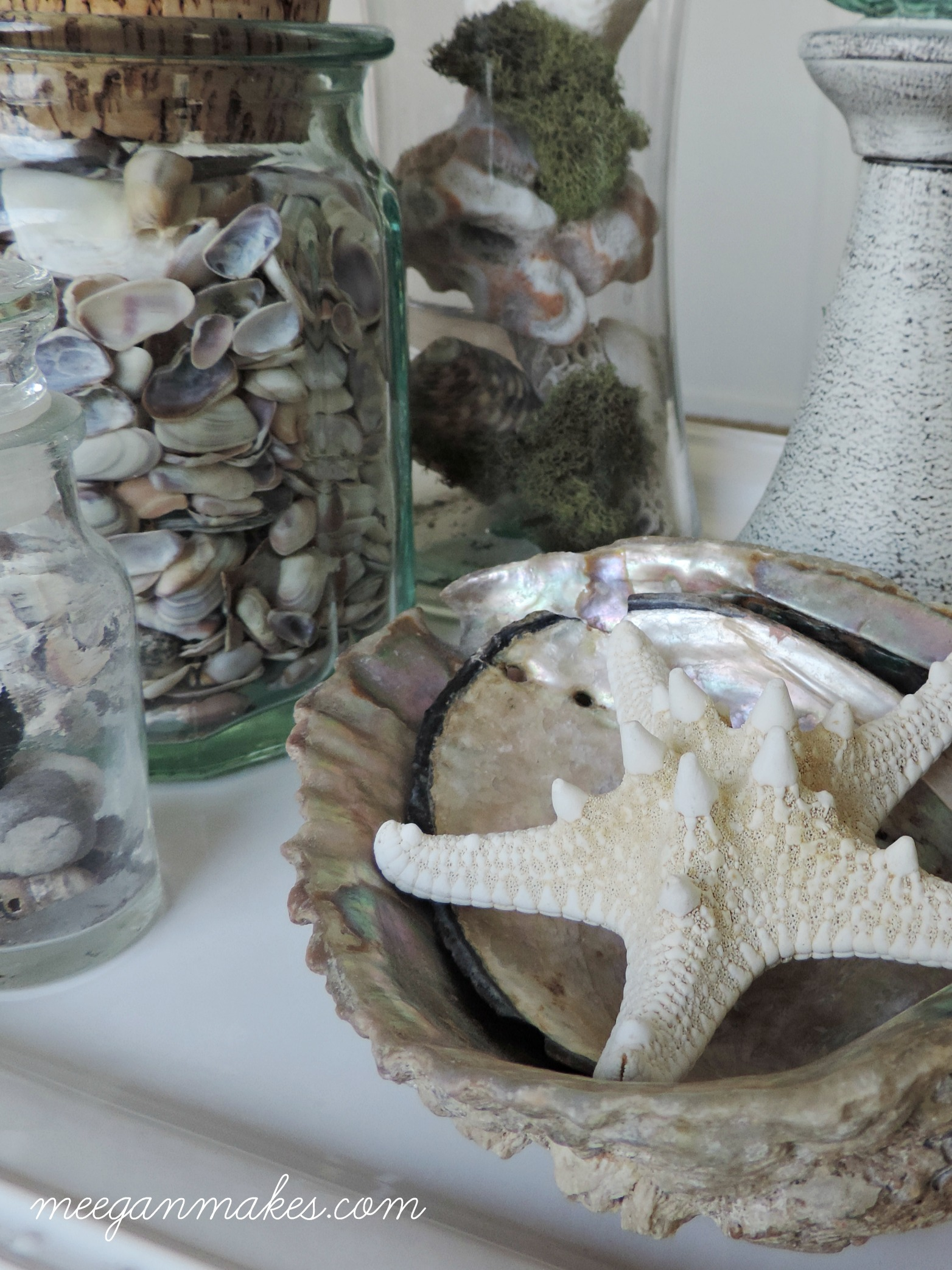 Shells for Beachy Summer Decor