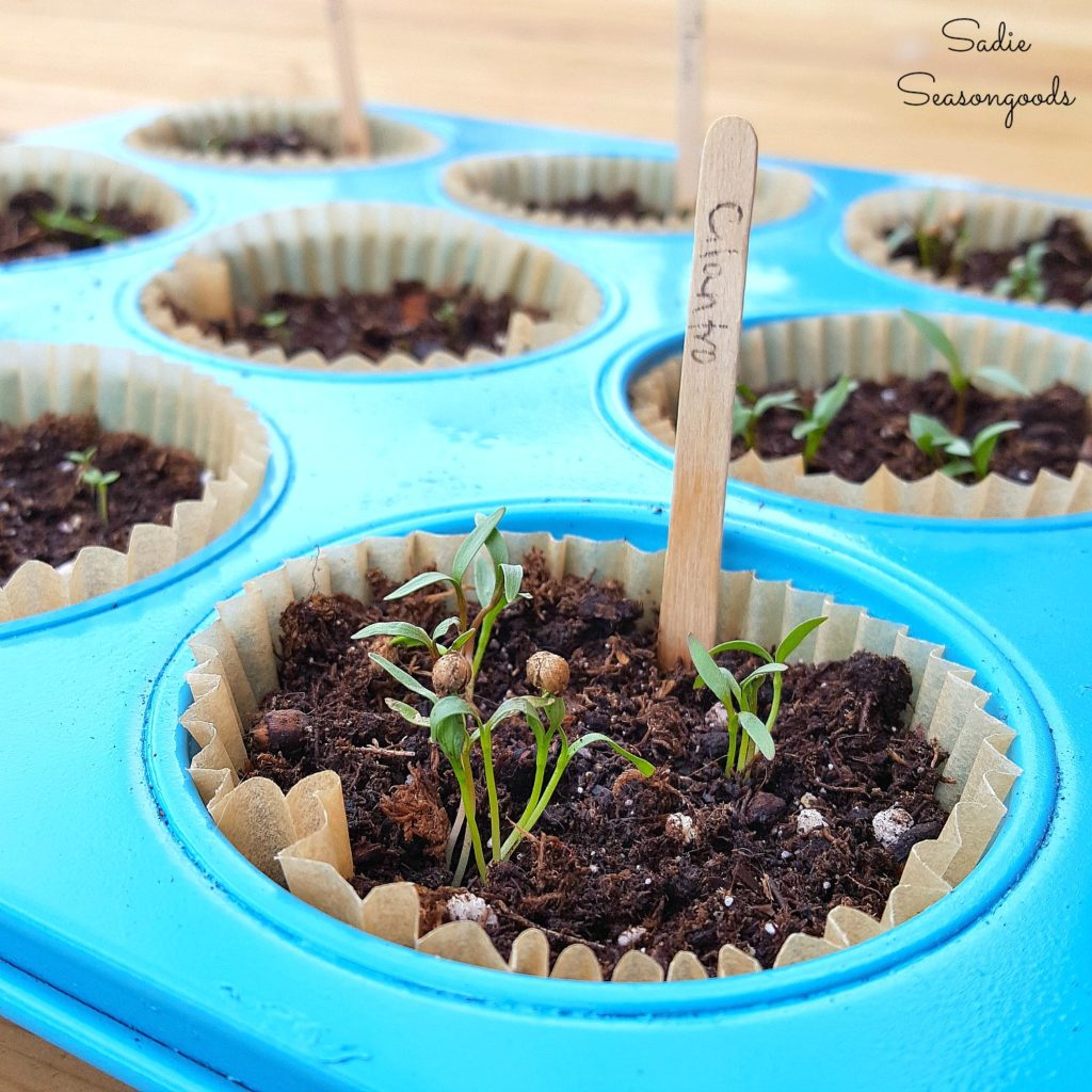 Muffin Pan Herb Garden
